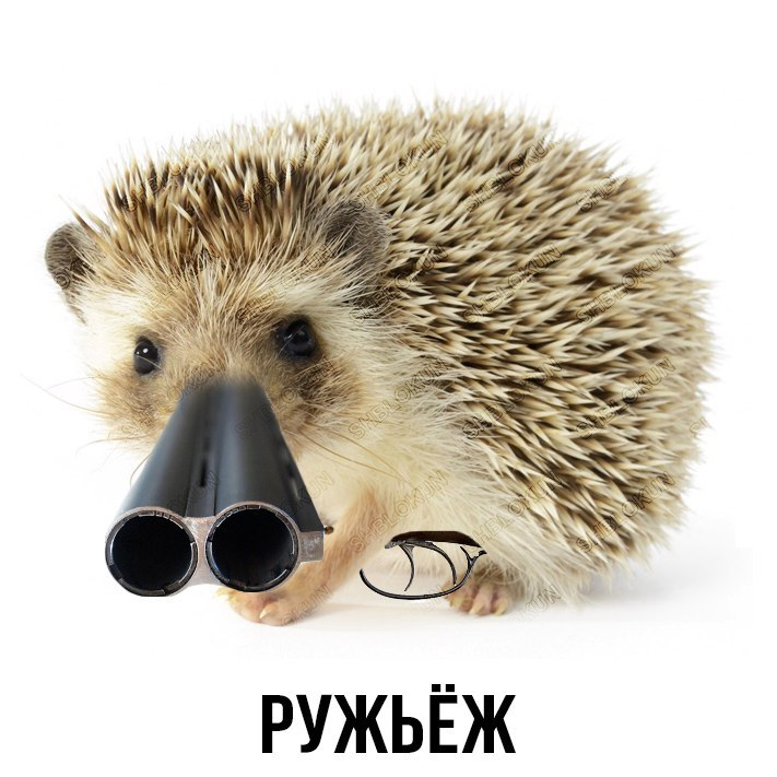 sovvoydh5nw